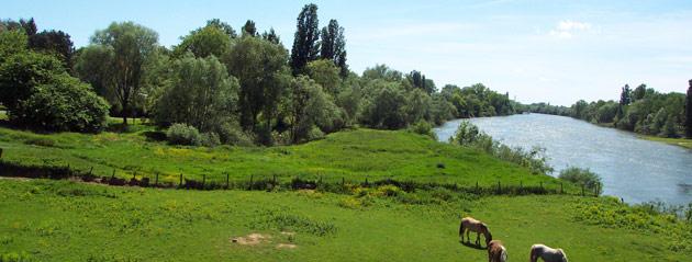 Fédération de pêche de Saône-et-Loire : la Loire